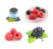 λευκό σμέουρων βακκινίων ανασκόπησης Καταφερτζής φρούτων Στοκ εικόνα με δικαίωμα ελεύθερης χρήσης
