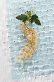 λευκό σταφίδων Στοκ φωτογραφία με δικαίωμα ελεύθερης χρήσης