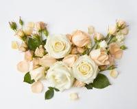 λευκό τριαντάφυλλων ανα&s Στοκ Φωτογραφίες