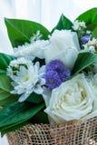 λευκό τριαντάφυλλων ανθ&o Στοκ Εικόνα