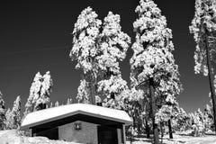 λευκό Χριστουγέννων Στοκ Φωτογραφία
