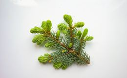 λευκό χριστουγεννιάτικ Στοκ εικόνες με δικαίωμα ελεύθερης χρήσης