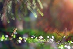 λευκό χλόης λουλουδιώ& Στοκ Εικόνα