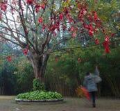ευλογία του δέντρου Στοκ φωτογραφία με δικαίωμα ελεύθερης χρήσης