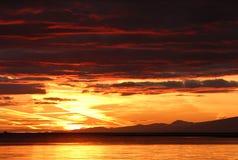 ευμετάβλητο ηλιοβασίλ&e Στοκ φωτογραφία με δικαίωμα ελεύθερης χρήσης