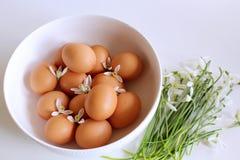 Ευπρόσδεκτη άνοιξη ευτυχές Πάσχα Snowdrops και αυγά στο άσπρο υπόβαθρο η έννοια Πάσχα απομόνωσε το λευκό ανασκόπηση που θολώνεται Στοκ φωτογραφία με δικαίωμα ελεύθερης χρήσης