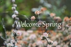 Ευπρόσδεκτη άνοιξη με τα ρόδινα λουλούδια στοκ φωτογραφίες