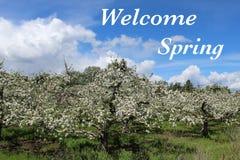 Ευπρόσδεκτο κείμενο ανοίξεων στον οπωρώνα μήλων με τις ανθίσεις Στοκ Εικόνες