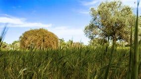 Ευπρόσδεκτη άνοιξη στους τομείς με τους μπλε ουρανούς στη Κύπρο Στοκ Εικόνες