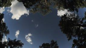 Ευρέα σύννεφα γωνίας που περνούν treetops timelapse φιλμ μικρού μήκους