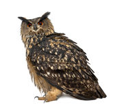 Ευρασιατική αετός-κουκουβάγια, Bubo bubo, 15 χρονών Στοκ Εικόνες