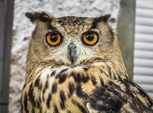 Ευρασιατική αετός-κουκουβάγια Trasmoz, Αραγονία Στοκ Εικόνα