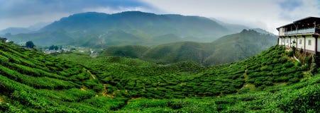 Ευρεία άποψη η όμορφη φυτεία τσαγιού στην ορεινή περιοχή του Cameron, Μαλαισία Καμπύλη και κλίση Hill με την ομίχλη, νεφελώδης ου στοκ φωτογραφία με δικαίωμα ελεύθερης χρήσης