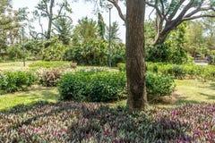 Ευρεία άποψη του πράσινου κήπου με τη χλόη, τα δέντρα, τις εγκαταστάσεις, τις σκιές και τη διάβαση, Chennai, nadu του Ταμίλ, Ινδί στοκ εικόνες