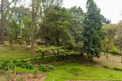 Ευρεία άποψη του πράσινου κήπου με τη χλόη, τα δέντρα, τις εγκαταστάσεις, το βουνό και τη διάβαση, Ooty, Ινδία, στις 19 Αυγούστου Στοκ Φωτογραφίες