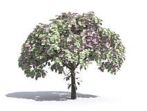 ευρο- δέντρο χρημάτων ελεύθερη απεικόνιση δικαιώματος