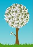 ευρο- δέντρο Στοκ Εικόνες