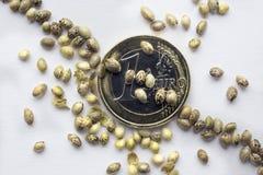 Ευρο- νομίσματα ένα με τους σπόρους μιας κάνναβης Στοκ εικόνα με δικαίωμα ελεύθερης χρήσης