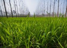 Ευρυγώνια άποψη ενός πράσινου τομέα φύλλων στοκ εικόνες