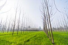 Ευρυγώνια άποψη ενός πράσινου τομέα φύλλων στοκ εικόνα με δικαίωμα ελεύθερης χρήσης