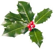 Ευρωπαϊκά φύλλα και φρούτα aquifolium της Holly Ilex Στοκ Εικόνα