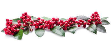 Ευρωπαϊκά φύλλα και φρούτα της Holly (Ilex) στοκ εικόνες με δικαίωμα ελεύθερης χρήσης