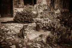 ευρωπαϊκές εικόνες σχεδίου γατών σας Στοκ φωτογραφία με δικαίωμα ελεύθερης χρήσης