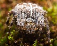 Ευρωπαϊκή αράχνη κήπων, Araneus Diadematus Στοκ φωτογραφία με δικαίωμα ελεύθερης χρήσης