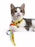 Ευρωπαϊκή γάτα shorthair που καθορίζει και που παίζει με τις σειρές colorfull Στοκ φωτογραφία με δικαίωμα ελεύθερης χρήσης
