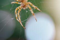 Ευρωπαϊκή διαγώνια αράχνη στον Ιστό Στοκ εικόνες με δικαίωμα ελεύθερης χρήσης