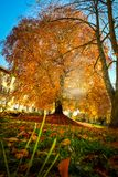 Ευρωπαϊκή οξιά στα όμορφα χρώματα φθινοπώρου στοκ εικόνα με δικαίωμα ελεύθερης χρήσης