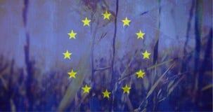Ευρωπαϊκή σημαία με ειρηνικό cornfield στο υπόβαθρο απόθεμα βίντεο