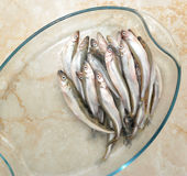 ευρωπαϊκή φρέσκια τήξη ψαριών Στοκ Εικόνες