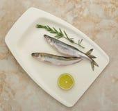 ευρωπαϊκή φρέσκια τήξη ψαριών Στοκ Φωτογραφίες