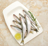 ευρωπαϊκή φρέσκια τήξη ψαριών Στοκ εικόνα με δικαίωμα ελεύθερης χρήσης