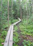 ευρωπαϊκό δάσος Στοκ Φωτογραφία