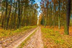Ευρωπαϊκό φθινοπωρινό δασικό τοπίο Στοκ Εικόνα