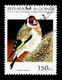 Ευρωπαϊκό Goldfinch (carduelis Carduelis), πουλιά serie, circa 199 Στοκ φωτογραφία με δικαίωμα ελεύθερης χρήσης