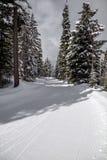 Ευρύ ίχνος που καλλωπίζεται για ανώμαλο να κάνει σκι κοντά σε Kelowna, Π.Χ. στοκ φωτογραφία με δικαίωμα ελεύθερης χρήσης
