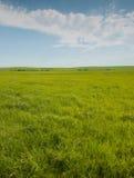 Ευρύ ανοικτό λιβάδι με την πολύβλαστη πράσινη χλόη Στοκ Εικόνες