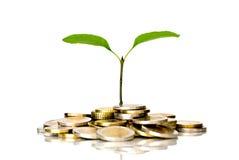 ευρώ νομισμάτων λίγο φυτό Στοκ Εικόνες