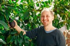 Ευτυχές άτομο στον κήπο του που παρουσιάζει ώριμο αβοκάντο Στοκ Εικόνες