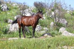 Ευτυχές άλογο χαμόγελου Στοκ Εικόνες