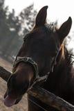 ευτυχές άλογο Στοκ Εικόνες