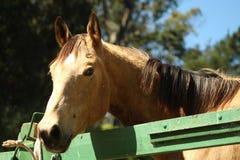 ευτυχές άλογο Στοκ εικόνες με δικαίωμα ελεύθερης χρήσης