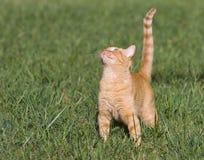 ευτυχές γατάκι κίτρινο Στοκ εικόνα με δικαίωμα ελεύθερης χρήσης