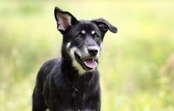 Ευτυχές γεροδεμένο σκυλί φυλής μιγμάτων, φωτογραφία υιοθέτησης διάσωσης κατοικίδιων ζώων στοκ εικόνες