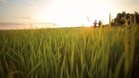 Ευτυχές ζεύγος που τρέχει σε έναν τομέα με την πράσινη χλόη απόθεμα βίντεο
