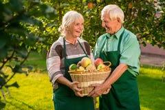 Ευτυχές καλάθι μήλων εκμετάλλευσης ζευγών Στοκ φωτογραφίες με δικαίωμα ελεύθερης χρήσης