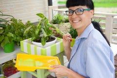 Ευτυχές κιβώτιο ζωγραφικής γυναικών χαμόγελου για τα λουλούδια πράσινα δοχεία λουλου&del Στοκ Εικόνα